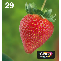 Epson Strawberry Multipack 4-colours 29 EasyMail